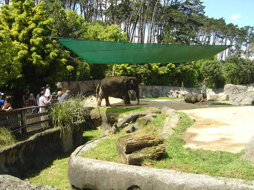 Elephants at Auckland Zoo