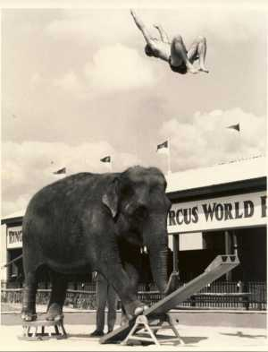 """Williams first rode an elephant when he was 4 months old. """"He knew their moves, and they knew his moves,"""" said his mother, Barbara Woodcock, 75. Williams later thrilled crowds as he rode Anna May — billed as the """"world's smartest performing elephant."""""""