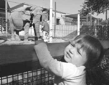 Eighteen-month-old Hailey Fleck of Murphy was among the thousands of children who visited Jenny the elephant at the Dallas Zoo last week during spring break. Critics say Jenny belongs in a sanctuary, and the zoo