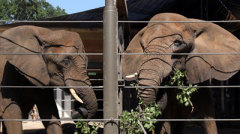 Jenny the elephant meets new friend Gypsy at Dallas Zoo