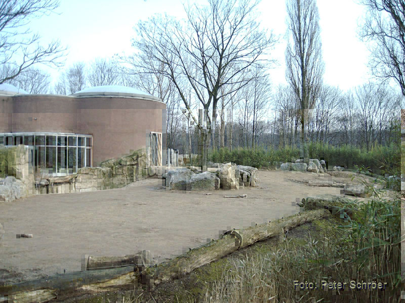Photo: Peter Schröer, elephantkeeper Duisburg Zoo