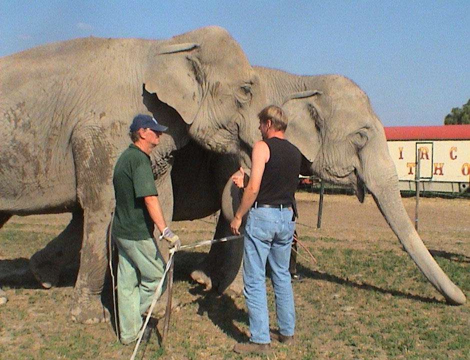 Giovanni Althoff (left) with his elephants in Bodenheim 2004. Photo by courtesy of Angie