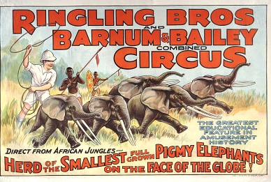 Female ♀ African Bush elephant Sudan at Ringling Brothers and Barnum and Bailey Circus