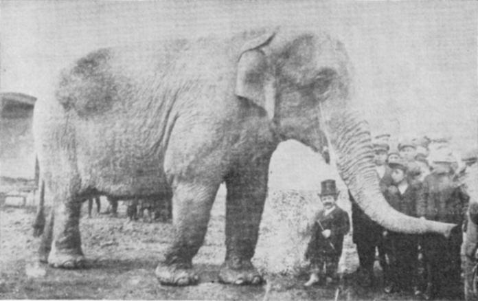 Female Asian elephant Nelly at Circus Kludsky (Cirkusu Kludsk�ch)