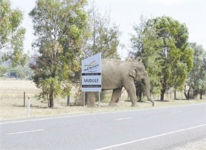 An elephant has escaped from Lipra's Circus, and remains at large in the Mid-Western Region