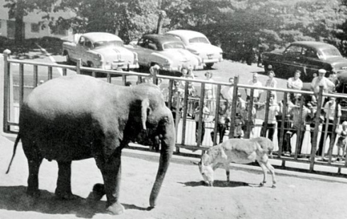 1949: Tillie, the dancing elephant, and her donkey companion, Joshua, are photographed with some visitors to Nay Aug Park Zoo.<br />