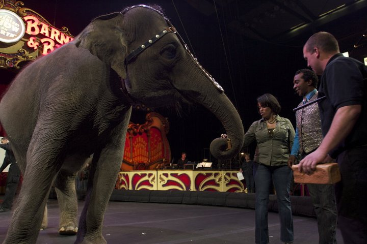 Female Asian elephant Kelly Ann at Ringling Brothers Barnum and Bailey Center for Elephant Conservation