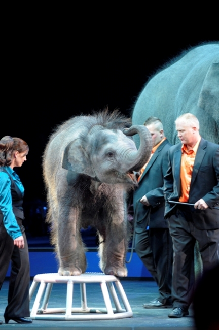 Baby Barack made his debut a few weeks ago when the new tour of the Ringling Bros. and Barnum & Bailey Circus opened in Orlando.