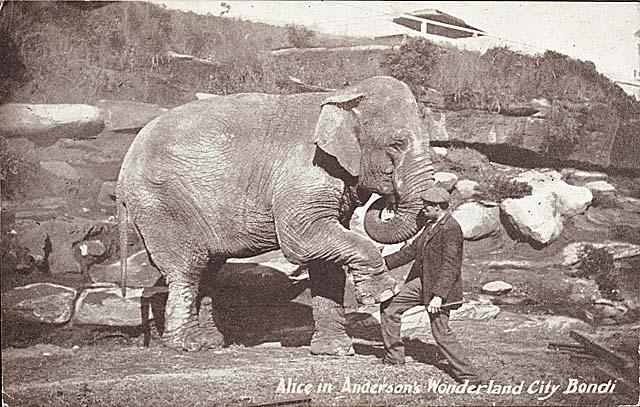 Female ♀ Asian elephant Alice (Princess Alice) at Wirth Circus
