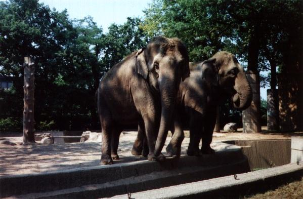 "Photo: <a href=""http://mirror-uk-rb1.gallery.hd.org/_virtual/ByAuthor/CS/"">Caroline Skene</a>/ <a href=""http://mirror-uk-rb1.gallery.hd.org/_c/natural-science/elephants-in-Berlin-zoo-CS.jpg.html"">DHD Multimedia Gallery</a>"
