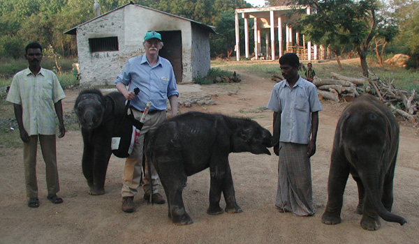 Dr Gary Hayward and elephants in Vandalur Zoo in Chennai, India