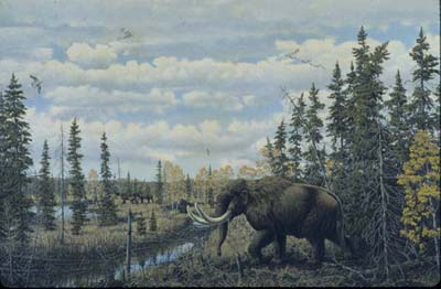 An American Mastodon in its typical Pine tree environment