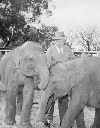 1963: Two recently imported elephants, Tricia and Tania, with elephant keeper Joseph Noble