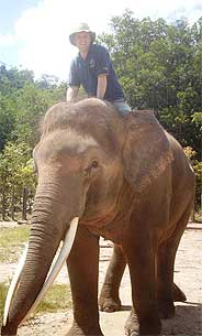 Male Asian elephant Rocco at Sabah Zoological and Botanical Park