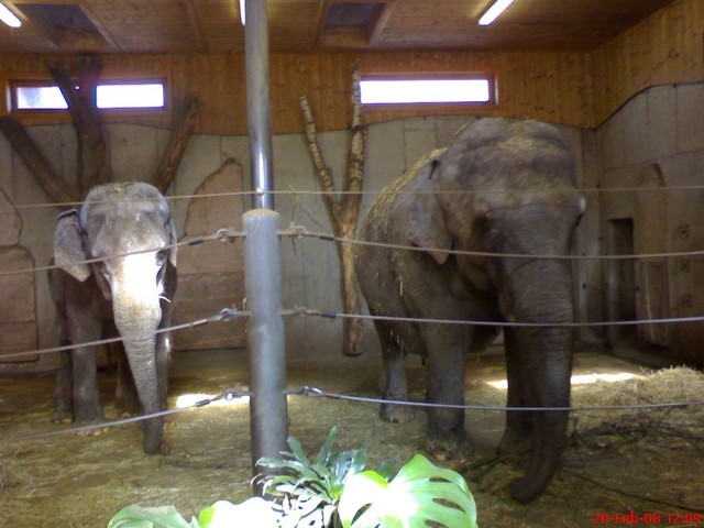 From left to right: Elephants Mary and Bimbi inside their stable.